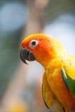 Sypialny miłość ptak na drzewie Zdjęcie Royalty Free