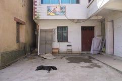 Sypialny pies na podłoga Zdjęcie Stock