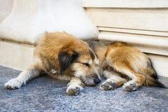 Sypialny przybłąkany pies Zdjęcie Stock