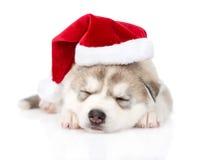 Sypialny Syberyjskiego husky szczeniak z Santa kapeluszem Odizolowywający na bielu Zdjęcie Royalty Free