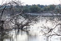 Syrdarya flod på gryning kazakhstan Arkivfoton