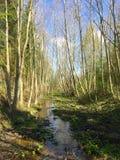 Syre och vatten Fotografering för Bildbyråer