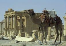 SYRIA PALMYRA ROMAN RUINS Royalty Free Stock Image