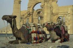 SYRIA PALMYRA ROMAN RUINS Stock Images