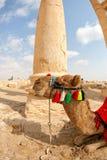 Syria - Palmyra (Tadmor) Stock Images