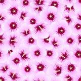 Syriacus do hibiscus - Rosa de Sharon Seamless Background Ilustração do vetor ilustração royalty free
