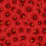 Syriacus vermelho do hibiscus - Rosa de Sharon Seamless Background Ilustração do vetor ilustração stock