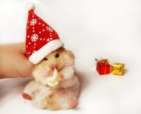 Syrian hamster in Santa hat Stock Image
