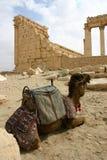 Syrien Stockfotografie