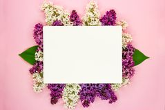 Syringa цветения vulgaris в карте цветка и чистого листа бумаги сирени для текстового сообщения r Романтичный состав цветков стоковое изображение