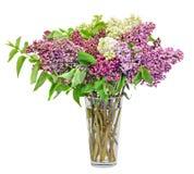 Syringa pourpre, rose et blanc vulgaris en fleurs transparentes d'un vase (lilas lilas ou commun), fin, fond blanc Photo stock