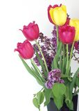 Syringa and tulips bouquet Royalty Free Stock Images