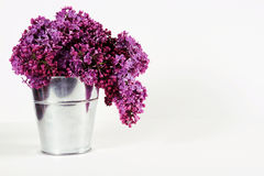 Syringa vulgaris. Purple syringa vulgaris in  a bucket Stock Photo