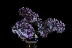 Syringa. Vulgaris on a black background Stock Photography