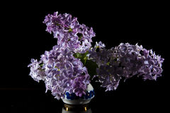 Syringa. Vulgaris on a black background Stock Images