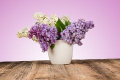 Syringa vulgaris Royalty Free Stock Photo