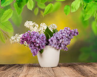 Syringa vulgaris Royalty Free Stock Images