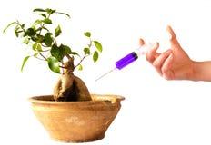 Syringe In Bonsai Stock Image