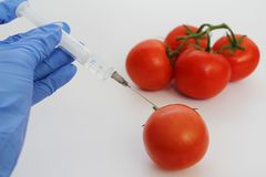 Syringe and tomatoes. Genetically modified nutritional concept stock photo