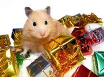 Syrischer Hamster, der mit Tonnen Weihnachtsgeschenken aufwirft stockbilder