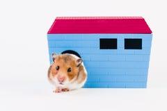 Syrischer Hamster mit Haus Stockfotografie