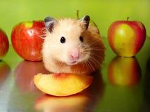 Syrischer Hamster mit Scheibe des Pfirsiches und der Äpfel Stockfotos