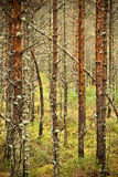 syrlig skogswamp Fotografering för Bildbyråer