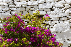 Syros. Flowers and a whitewashed dry stone wall in Ano Syros village on Syros island Stock Photos