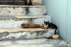 Syros Island. Cats resting in the hot afternoon at a stairway in Syros Stock Image