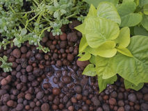 Système d'Aquaponics photo stock