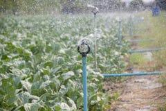 Système d'arrosage de l'eau Photos libres de droits