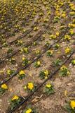 Système d'irrigation. Photographie stock