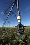 Système d'irrigation au-dessus de culture de maïs Photographie stock