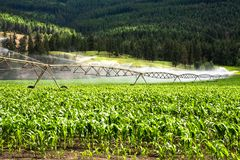 Système d'irrigation de pivot arrosant un champ de maïs dans le Cluntryside de la Colombie-Britannique sur Sunny Summer Day images libres de droits