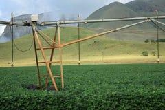 Système d'irrigation de plan rapproché à une ferme Images libres de droits