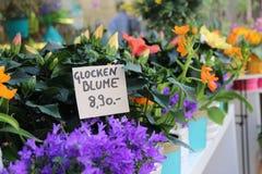 Système de fleur Images stock