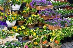 Système de fleur Photos stock