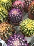 Système de fleur Les fleurs lumineuses et les plantes vertes se tiennent emballées dans des pots sur des étagères et des plateaux Photo stock