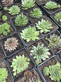 Système de fleur Les fleurs lumineuses et les plantes vertes se tiennent emballées dans des pots sur des étagères et des plateaux Photos stock