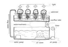 Système hydroponique de reflux et d'écoulement Images libres de droits