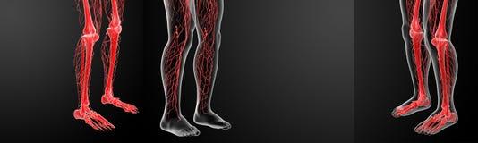 système lymphatique Photos stock