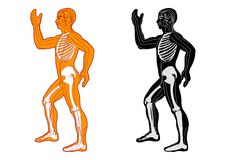 Système musculaire illustration libre de droits
