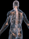 Système squelettique illustration stock