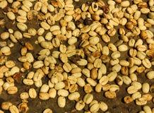 Système traditionnel de sécher le café image stock