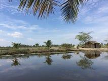 Systèmes d'aquiculture, ferme étendue de culture de crevette de tigre Photo libre de droits
