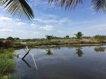 Systèmes d'aquiculture, ferme étendue de culture de crevette de tigre Photos stock