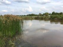 Systèmes d'aquiculture, ferme étendue de culture de crevette de tigre Images libres de droits