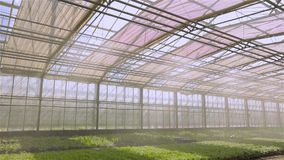 The system of automatic watering of plants in the greenhouse, irrigation irrigation system in a modern greenhouse. The. Operation of the irrigation system in stock footage