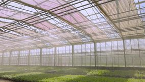 The system of automatic watering of plants in the greenhouse, irrigation irrigation system in a modern greenhouse. The. Operation of the irrigation system in stock video footage