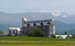 System för kornlagringssilor med uttorkningtornet framme av ett grönt fält i vår Royaltyfria Bilder